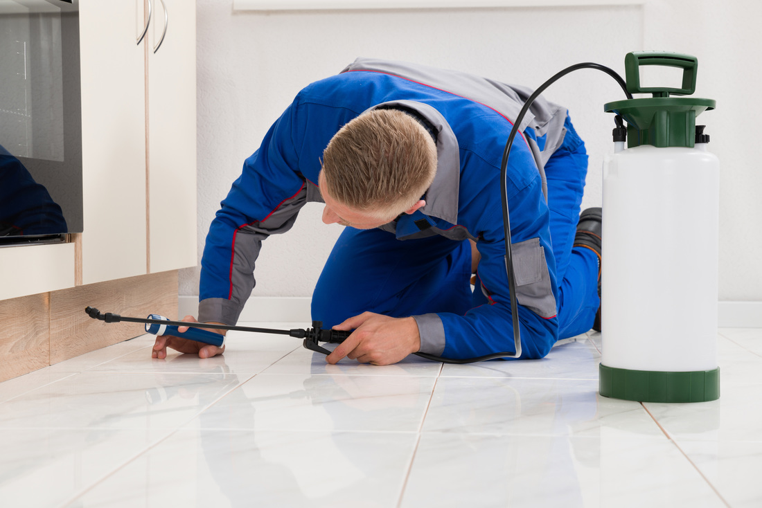 Scottsdale pest control services